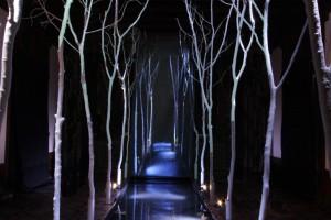 La stanza di Dafne-il bosco